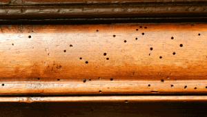 sinais de infestação de cupim